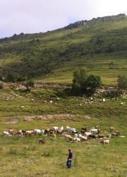 Terçera imatge de la secció Vedella de pastura